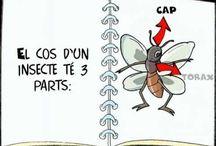 Projecte Insectes P5