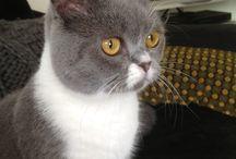 Onze kat Misty