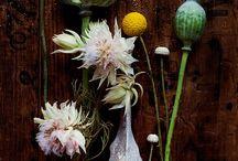 Botanical Photography / by John Blignaut