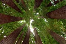 TERRIFIC TREES / Majestic, awesome, cool grandeur. Only God could make a tree.