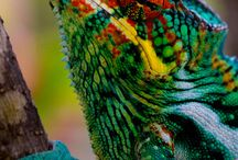 Colorful Creatures / by Leda Palermo