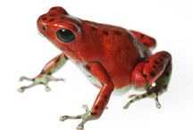 Frogs Our My Favorite...