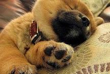 Come è dolce dormire