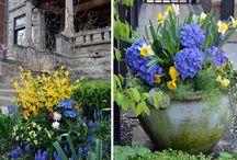 Container/Seasonal garden ideas