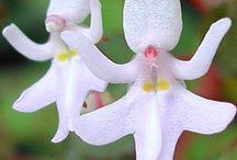 Flores ! / Diversos espécies de flores encantadoras.