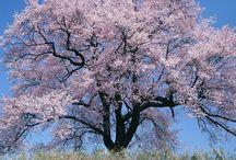 Trees......