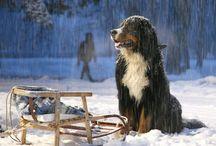 Солнечный пес