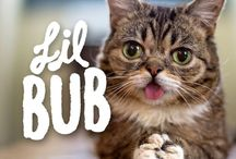 A Place For Lil Bub / It's about Lil Bub, duh.................  / by Black Orphan
