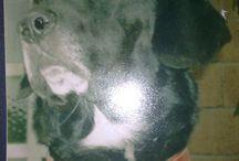 Animali / My Dog