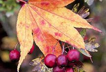 palette autunno