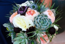 Succulents, cacti and aloes