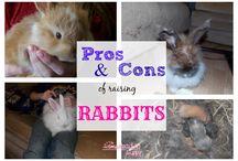 Homesteading | Raising Rabbits / Raising Rabbits on the homestead