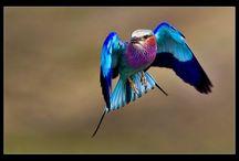 Beautiful Birds / by Paula McCleery
