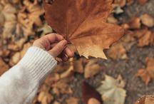 Herfst background