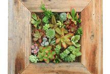 Plantes et jardinage / by Magazine Châtelaine