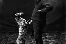 Victorian Pets / by Damiana Seabrook