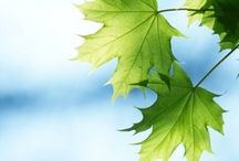 moreTrees -- Tree Inspiration