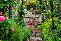 Garden / by Solveig M.