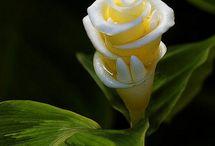 Houseplants: flowers