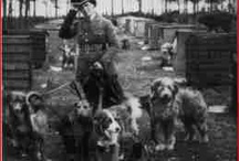 WAR... ANIMALS in war - DOGS, Horses, pigeons and cats / by Catherine Ligon