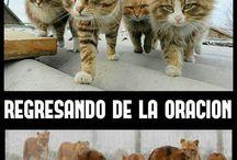leones y gatos