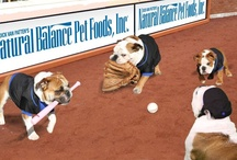 Bark in the Park / Photos from baseball games and 'Bark in the Park' events, sponsored by Natural Balance Pet Foods. I'll be at the NY Mets, Texas Rangers and LA Dodgers this season.