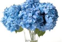 Hydrangea Birthday Boquet / by Rebecca Guyton
