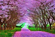 Natureza ME encanta ♥♥