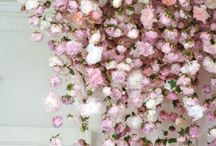 FLOWER POWER AND GREENERY / I love flowers and plants. Here are some inspiring blossoms and blooms for your wedding or home.