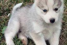 sweet little Dogs