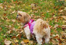 Doggie Photos