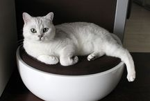 Pet Baroque / Luxury designer pet beds for cats, small dogs and other small pets.