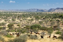 Game viewing at Tswalu / Game viewing at Tswalu from a 4 x 4 Land Rover, on horseback or walking trail...