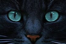 gatti stupendi