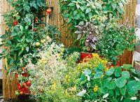 gardening :] / by Sarah Arnold