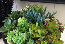 terrazza / Plants, vases, terreno, piante