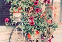 Garden/Yard Ideas / by Tam Wright