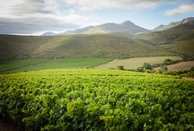The beauty of Jakkalsvlei / Rolling hills and lush green vineyards