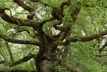 Die Kraft der Natur / Natur ist Schönheit, Kraft und Gesundheit