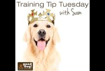 Dog Training Tips! / Training Tip Tuesdays: Get tips from our lead trainer Sam!