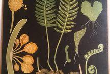 Old scietifical and historical illustrations, vanhoja tieteellisiä ja historiallisia kuvatauluja