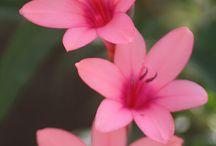 Flower / (▰˘◡˘▰)