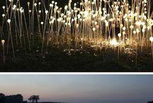 Lights Landscape