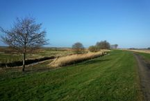 natuur#nature # Holland# fotografie# bloemen # bomen #flowers # fotografie#bloemen#wolken  #polder  #bomen  #mooi