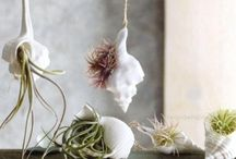 Creative indoor plants ideas / Herbs, air plants, vegetable starts and more - making the most of the indoors when weather or space doesn't allow getting your hands dirty outdoors.