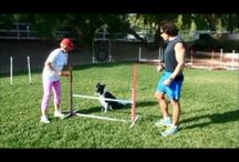 Agility Training / by Tracey Bindner