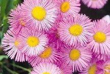 Çiçek Tohumları