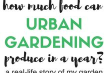 Urban Gardening for Beginners / Everything gardening for small spaces.  Urban gardening, square foot gardening, how to grow vegetables and flowers, the best perennials, container gardening, and more!