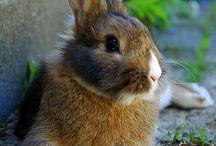 Bunnies  / by Juulske J.