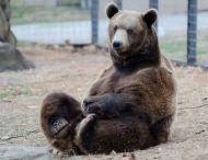 TCWR Bears / Turpentine Creek Wildlife Refuge provides lifetime homes for abandoned, abused, and neglected 'big cats'. And bears. :)  / by Turpentine Creek Wildlife Refuge